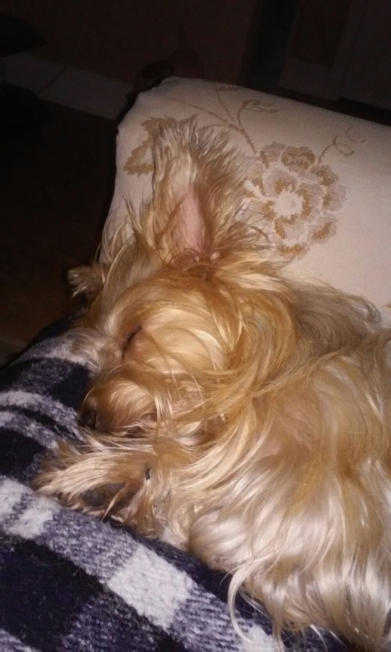 My Quinn Puppy
