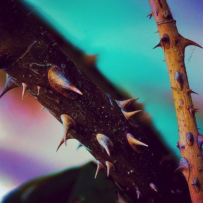 Thorns Lightpainting Light Exposure Nightphotography Photographie  Focus Capture Longexposure Fotographia Summer Flowers Summer Nature Details Macro Picture LOVEhurts Flowerporn