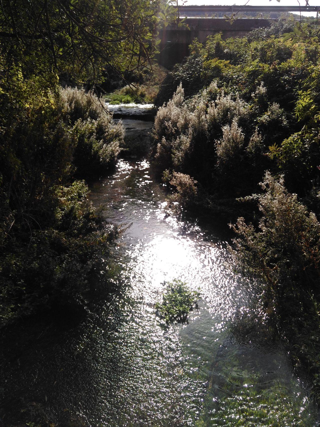 Sunlight Stream Brook BACH Jakobsweg Way Of Saint James Camino CaminodeSantiago Camino De Santiago Way Reise Travel Water