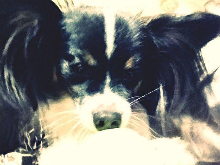 penny is cute dog First Eyeem Photo