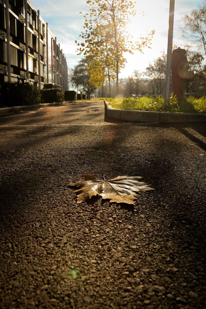 street, tree, road, animal themes, one animal, outdoors, autumn, leaf, day, no people, building exterior, architecture, nature, close-up, city, sky