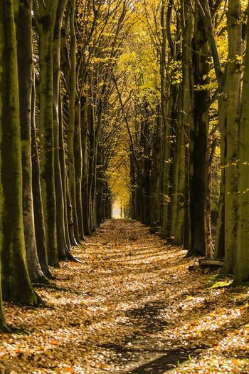 The Way Forward Autumn Leaf Tree No People Nature Day Forest Beauty In Nature Outdoors Canonphotography Be. Ready.
