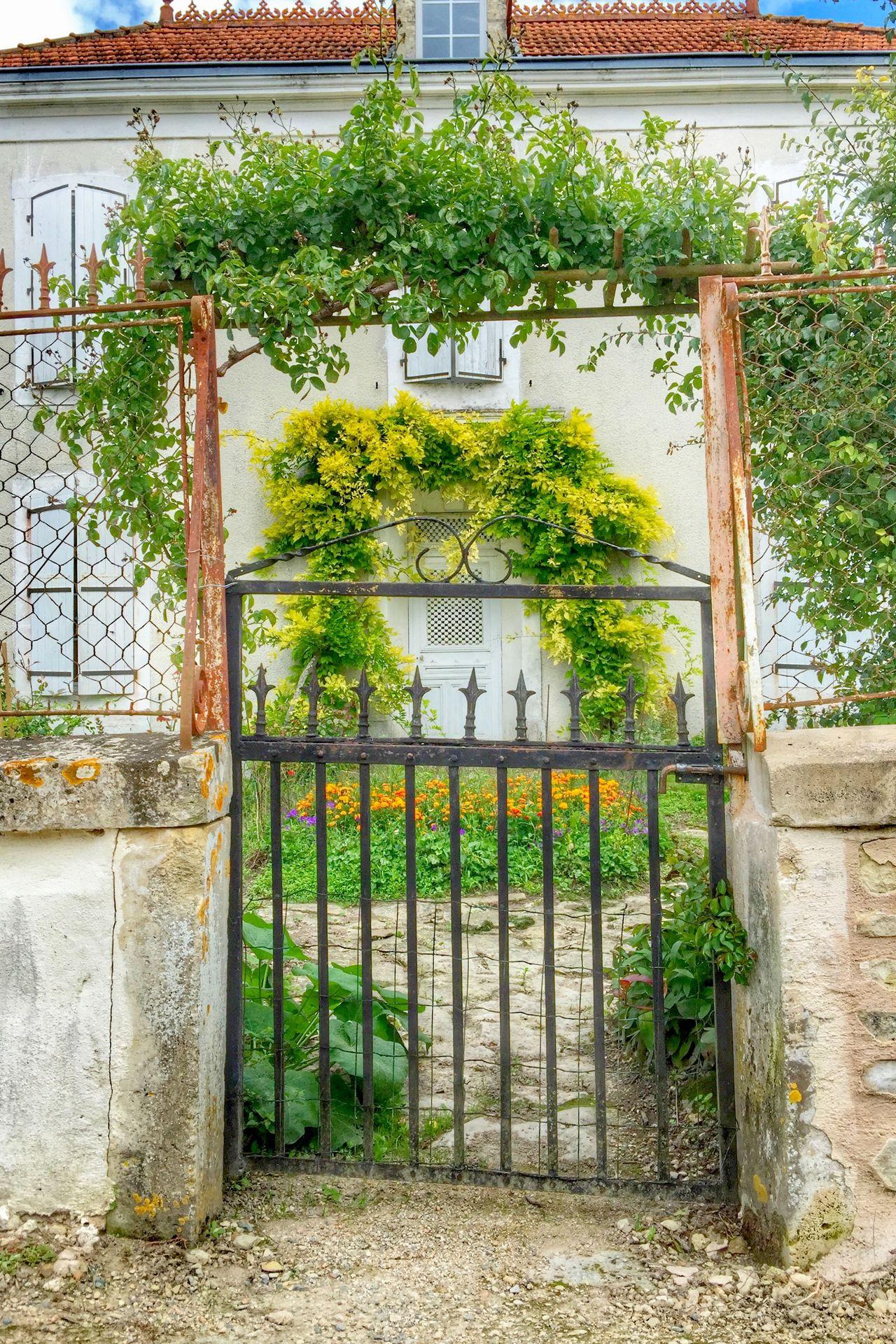 Door Garden Summer IPhoneography