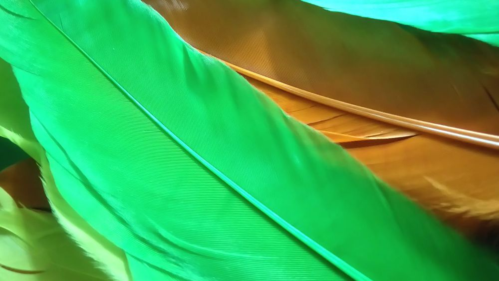 Green Color Abstract Backgrounds Nature Close-up No People Biology Outdoors Day Feathers Close-up Close Up Feathers