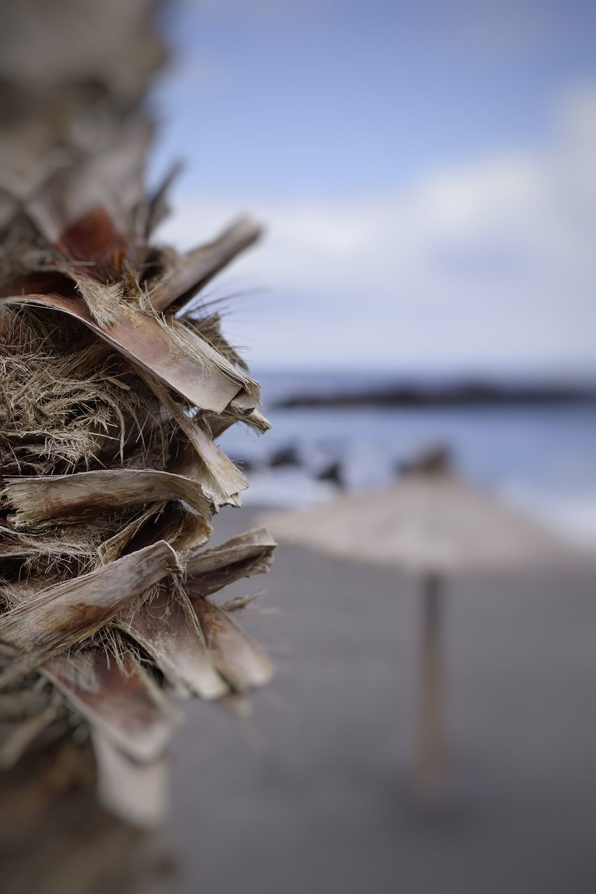 nature, close-up, no people, beauty in nature, selective focus, focus on foreground, tranquility, outdoors, day, sea, beach, water, scenics, sky, horizon over water