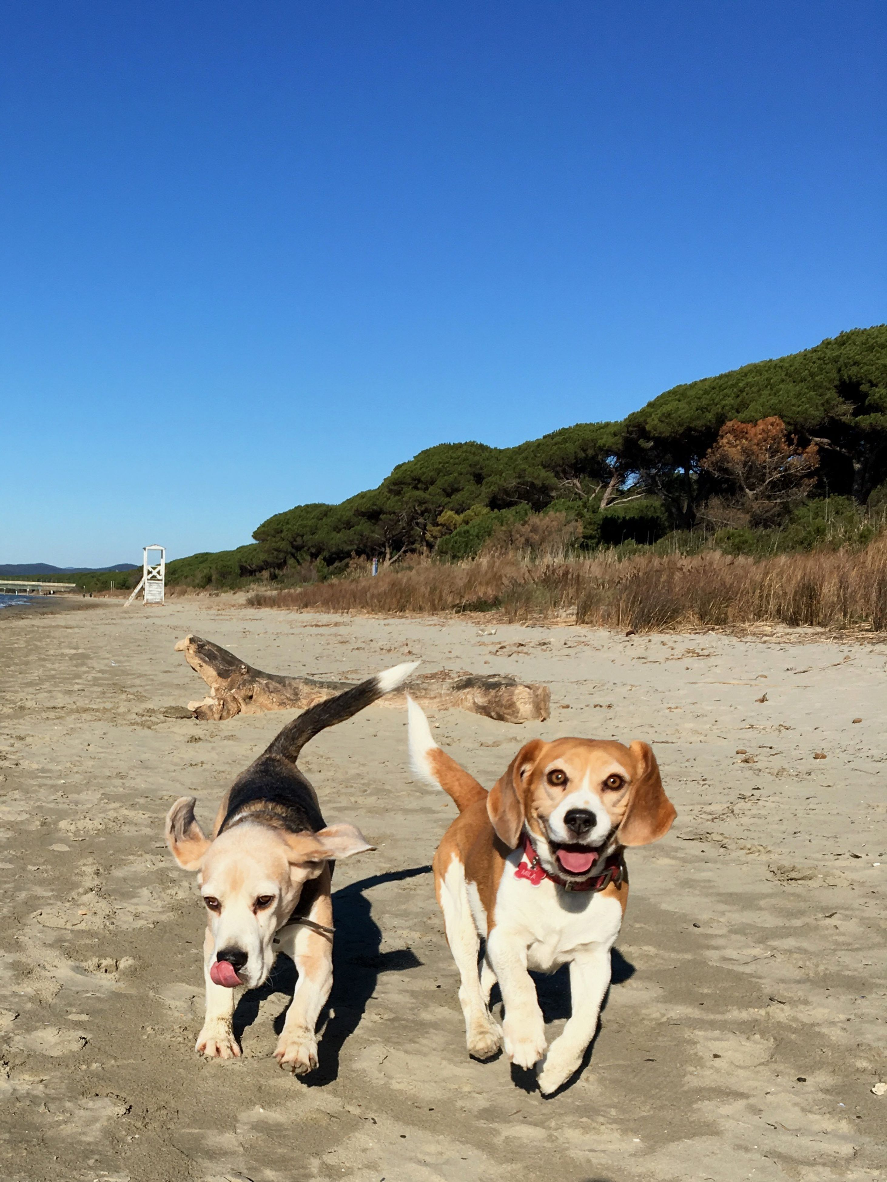 dog, domestic animals, pets, animal themes, mammal, clear sky, outdoors, beach, canine, day, no people, sky, nature, tree, togetherness