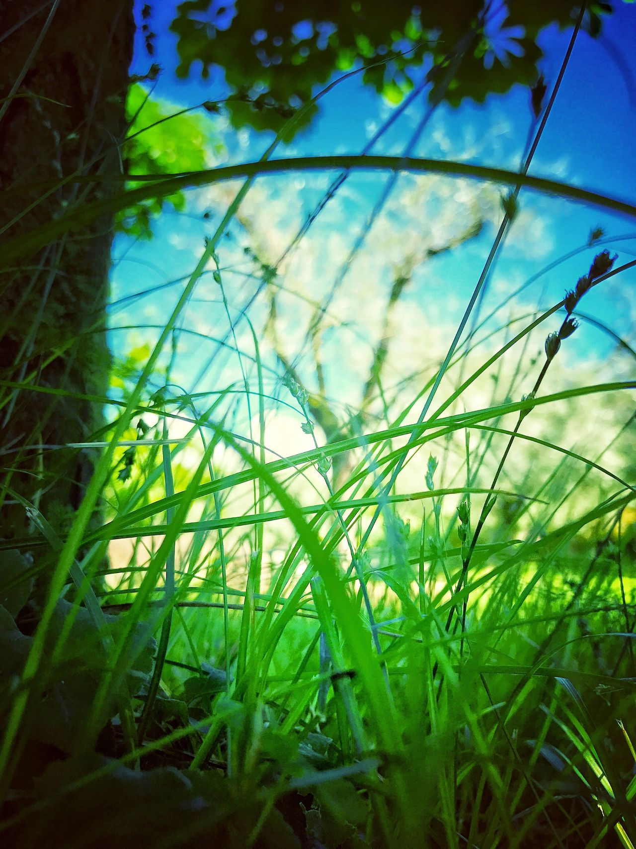 Grass Growth Green Color Nature No People Day Plant Close-up Outdoors Beauty In Nature Sky Freshness