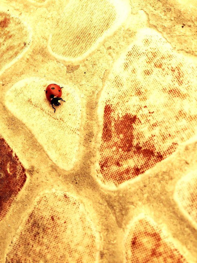 Uğur Ugurbocegi Sıcak