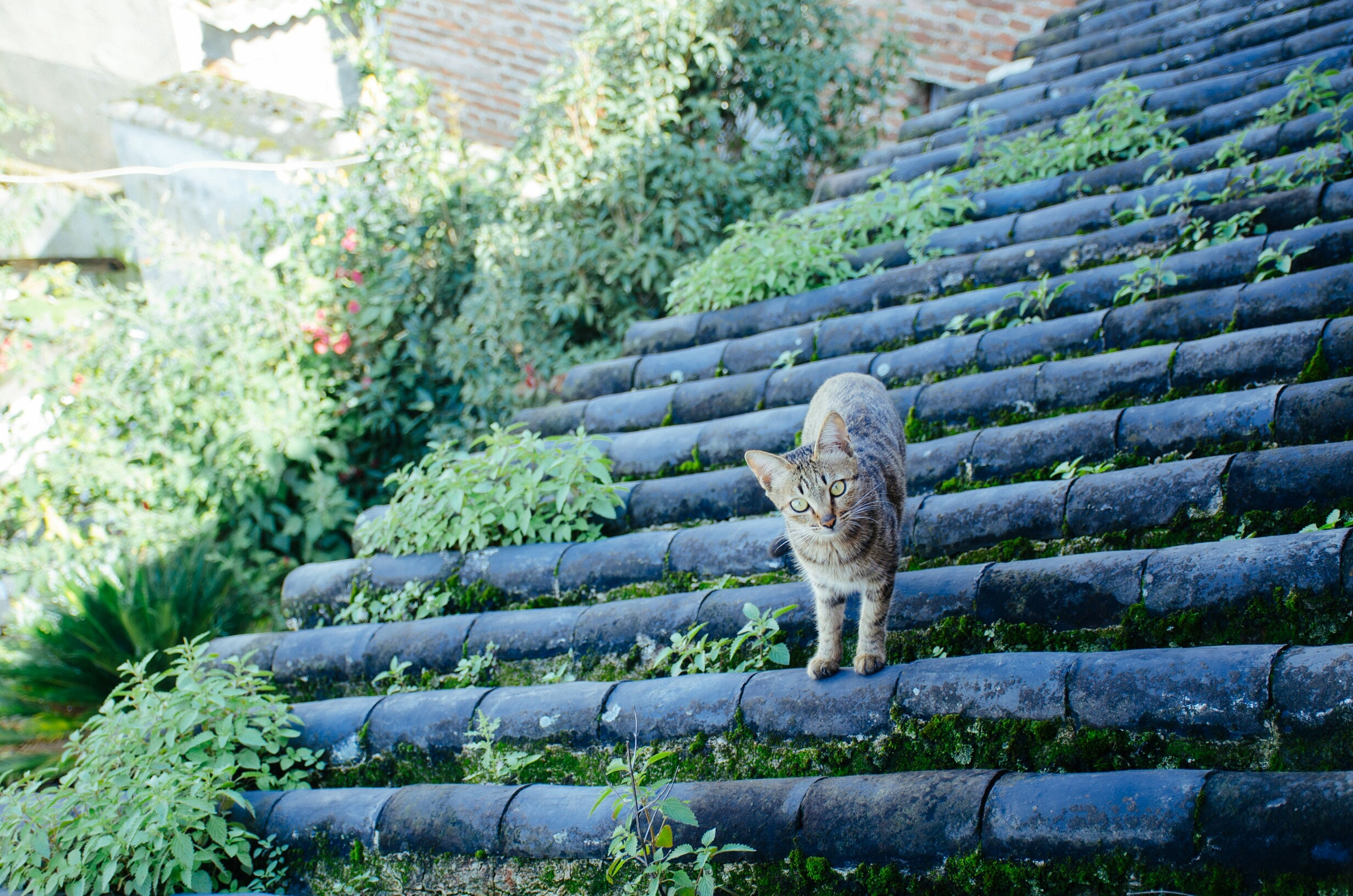 one animal, animal themes, mammal, domestic cat, plant, cat, animals in the wild, feline, pets, wildlife, full length, sitting, domestic animals, outdoors, side view, nature, growth, no people, green color, day