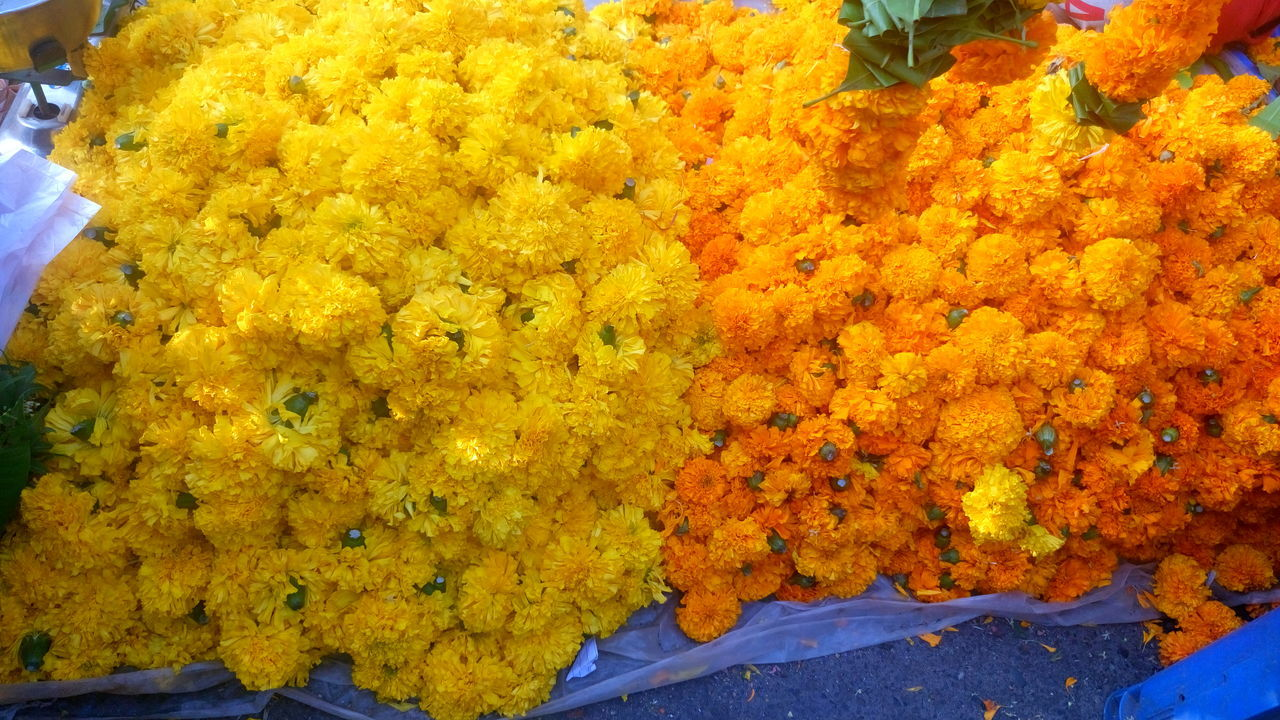 yellow, marigold, flower market, for sale, close-up, high angle view, flower, freshness, retail, fragility, day, no people, outdoors