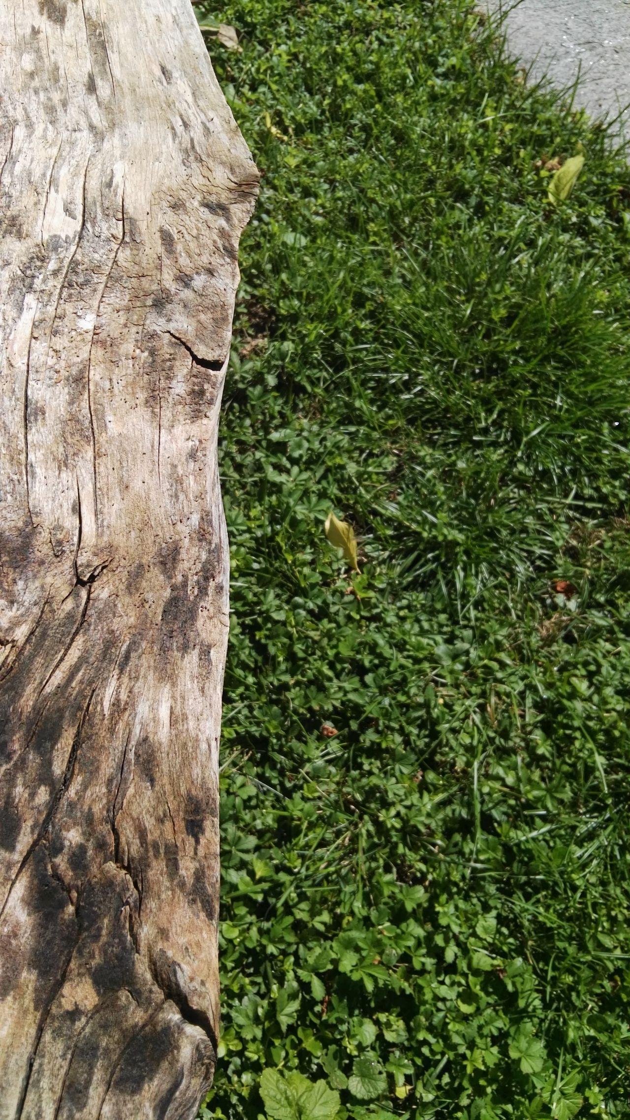 Holzbank Wiese  Steinplatte Blätter, Woodbank Weed Stoneplate Leaves🌿