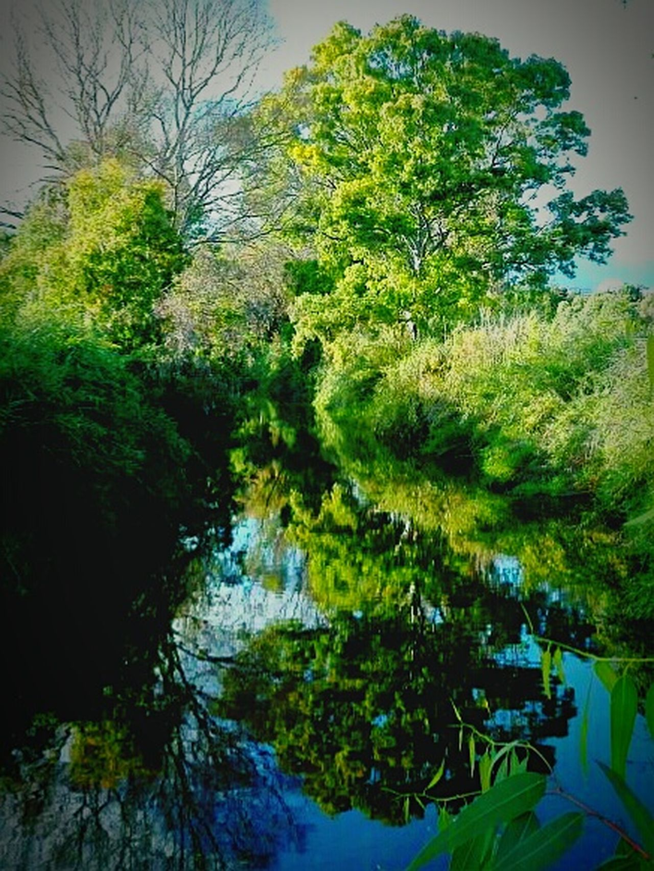 Nature Water Reflection Outdoors Green Color Tranquil Scene No People Scenics Tree Day Beauty In Nature The Great Outdoors - 2017 EyeEm Awards Landscape Spain🇪🇸 Analuisa Marbella