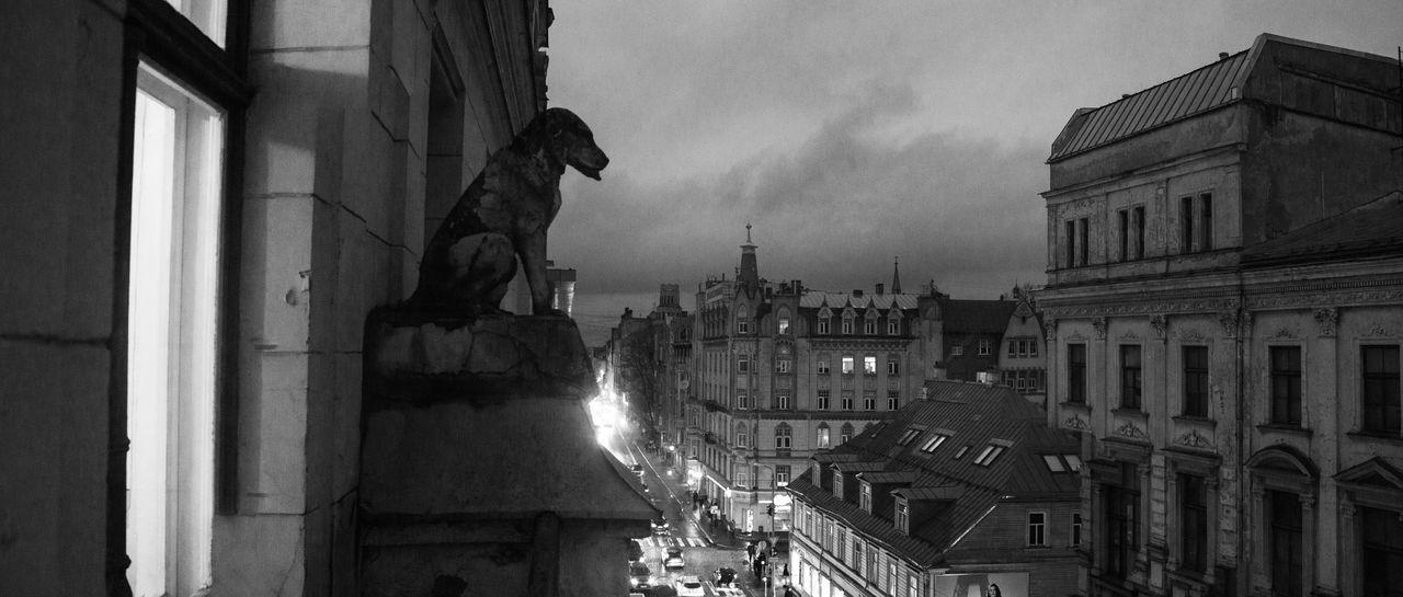 Animal Statue Animal Themes City Cityscape Dog Landscape Latvia Riga Statue