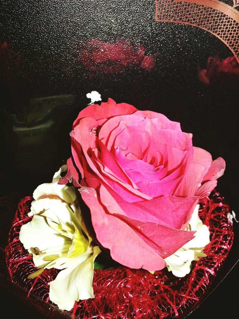 Happy Valentines Day ❤ EyeEm Flower Celebrating Love! EyeEm Best Edits EyeEm Gallery Eyeem Philippines Rose🌹 Heartbeat Moments