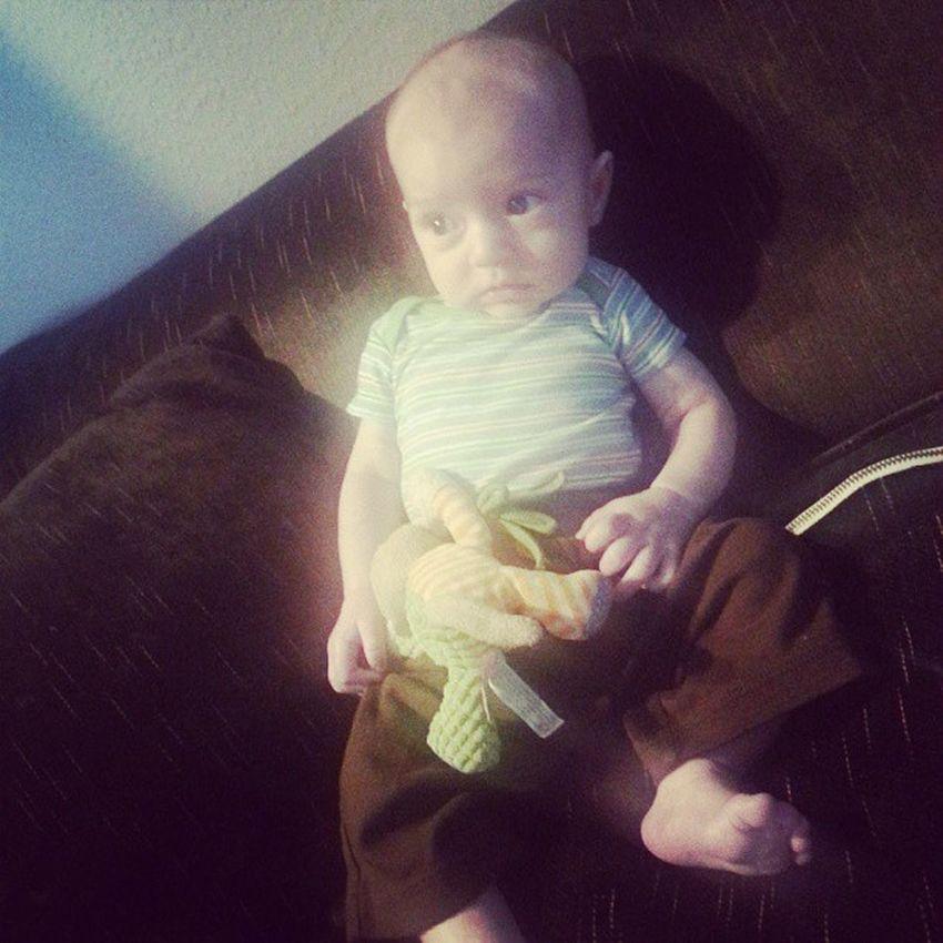 Baby Z. Baby Cutie Adorable Gahh zebandalies baby