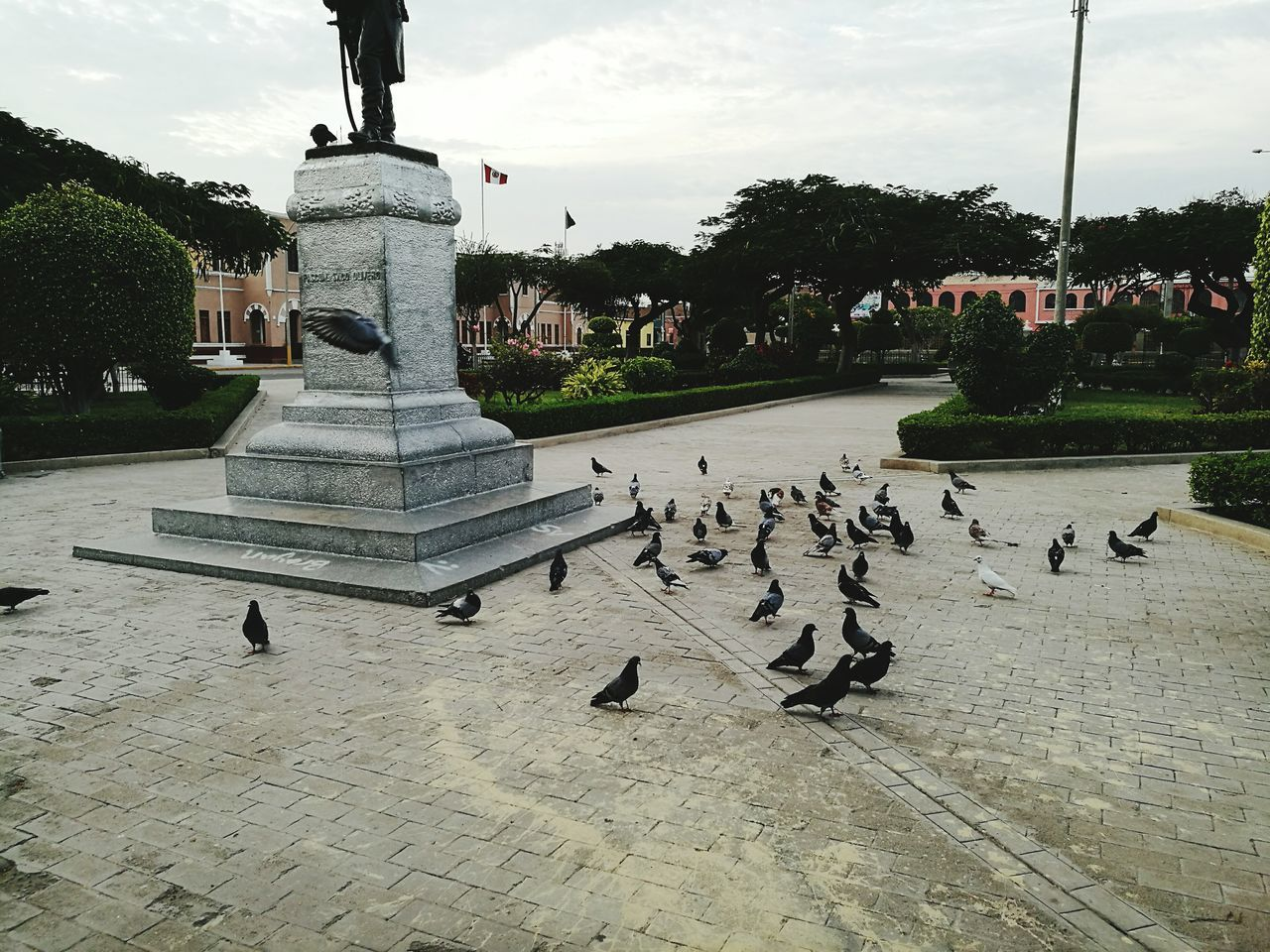 bird, animals in the wild, large group of animals, animal themes, sky, outdoors, day, tree, animal wildlife, flock of birds, cloud - sky, sculpture, no people, nature, statue, architecture, water