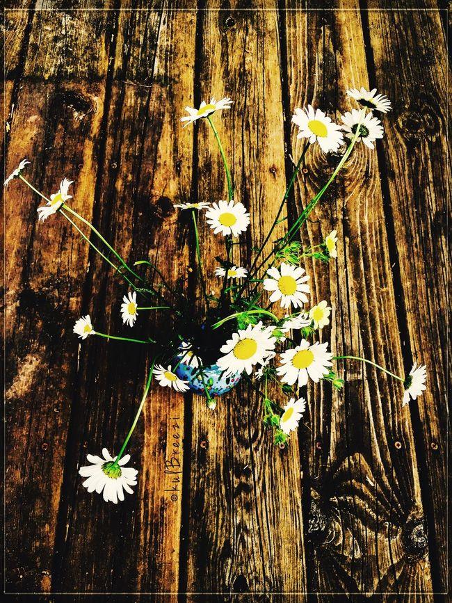 Patch of blue 🔹 Garden Series StreamzooVille Flowerpower Wild Flowers