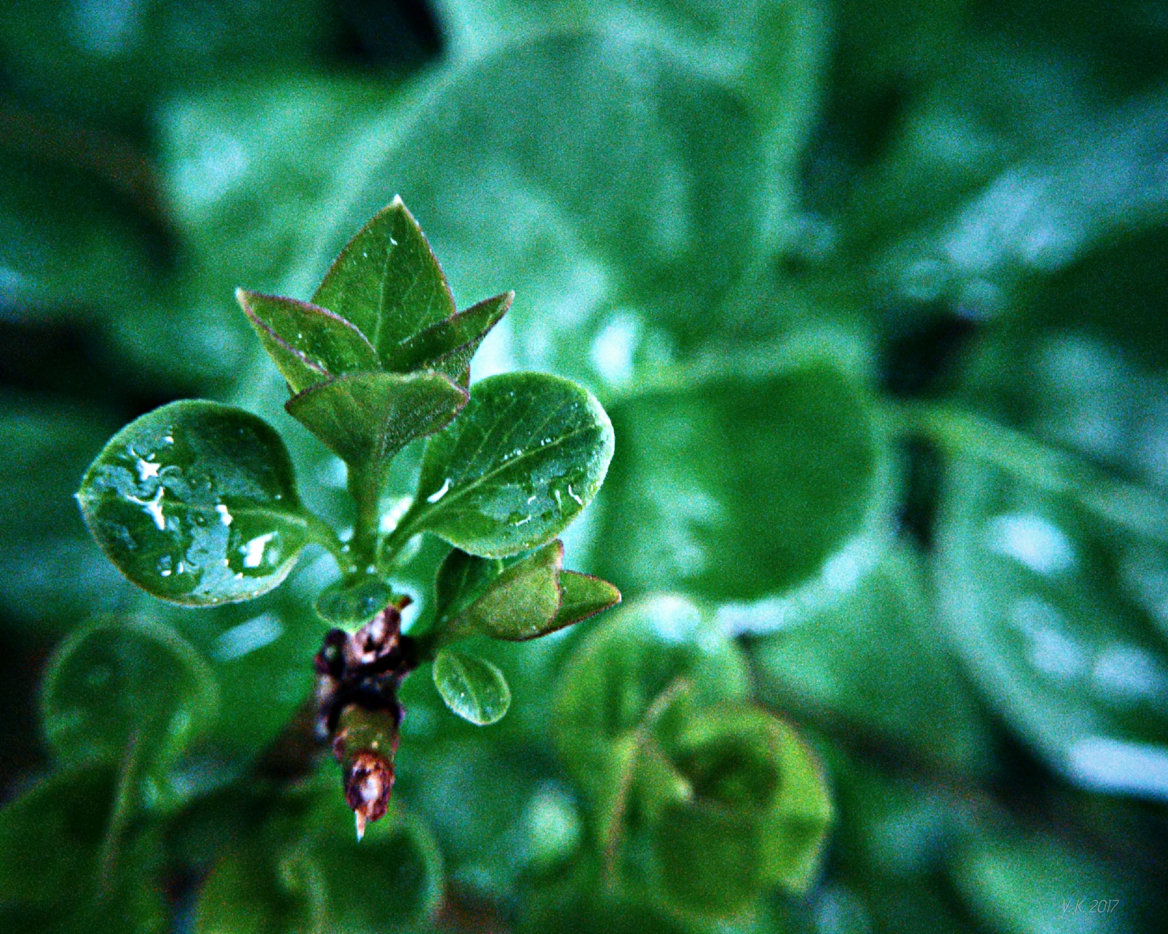 growth, plant, leaf, nature, close-up, green color, drop, no people, focus on foreground, day, beauty in nature, outdoors, fragility, freshness