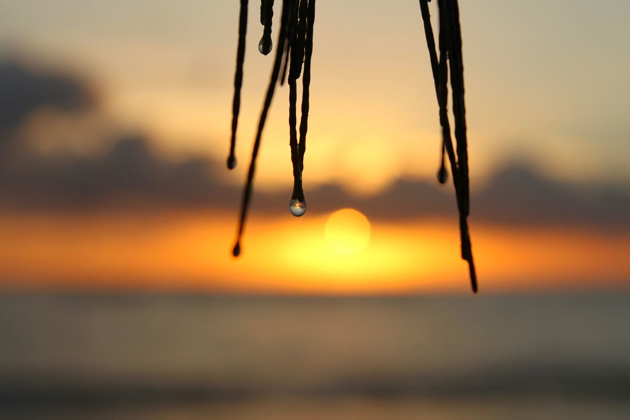 sunset, nature, water, beauty in nature, tranquility, focus on foreground, sea, outdoors, close-up, hanging, no people, scenics, sky, day