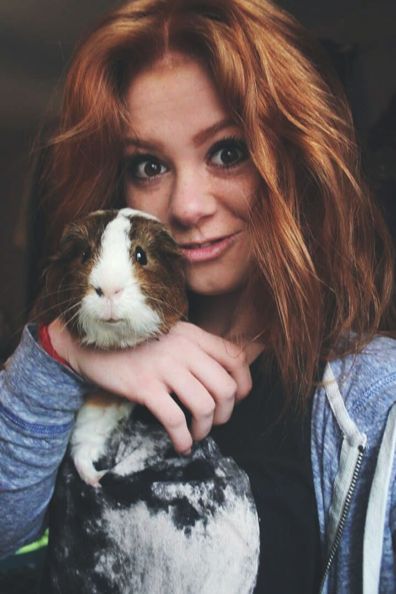 Guinea Pig Oink Theo Redhead