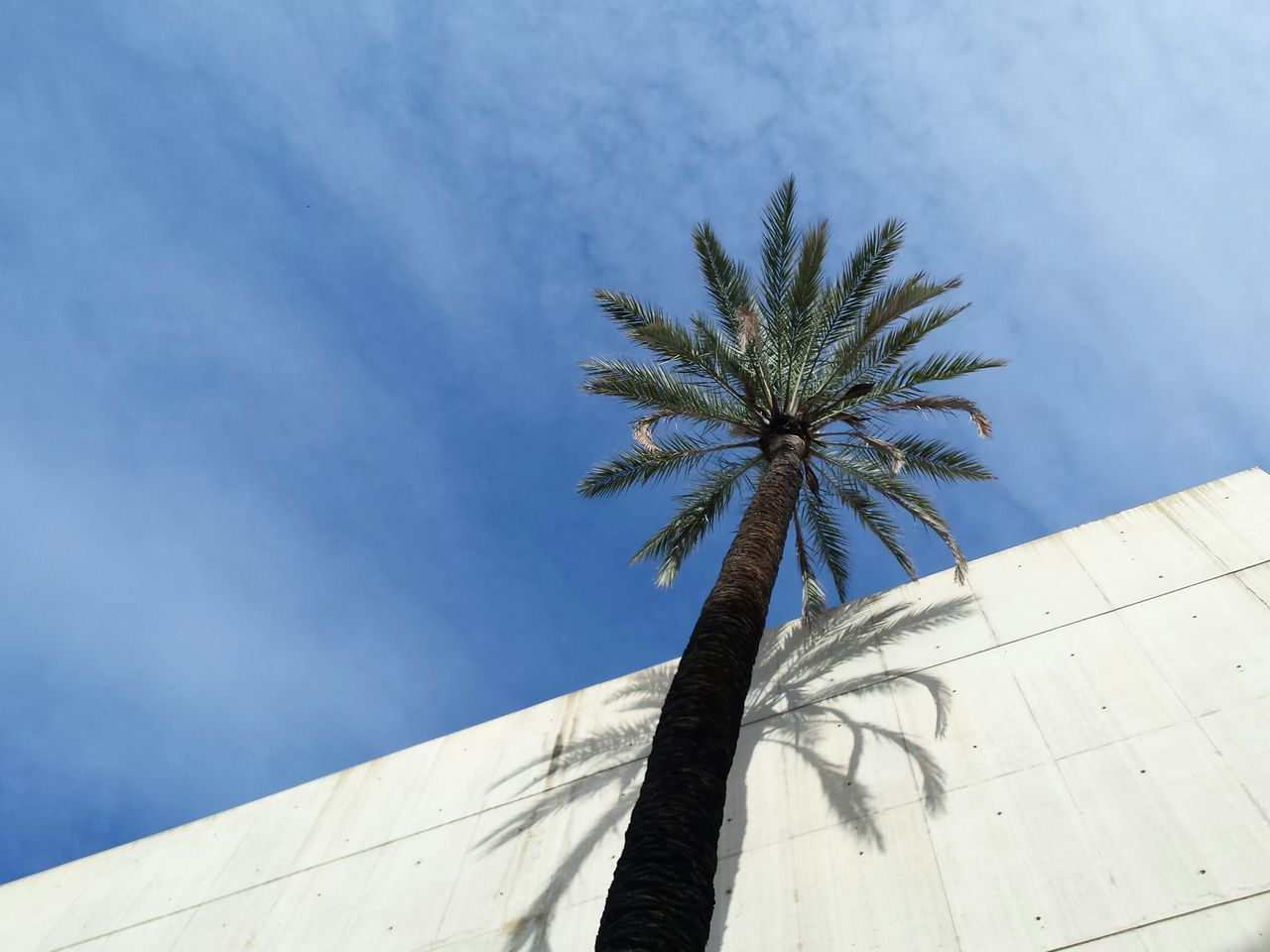 low angle view, architecture, day, palm tree, built structure, no people, outdoors, tree, building exterior, sky, nature