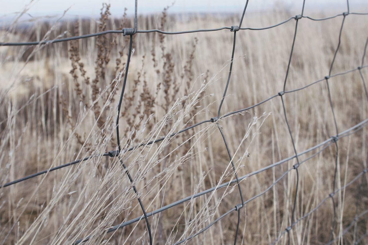 Nature Outdoors Field Close-up Beauty In Nature Rocks Grassland Dryland Dry Autumn Border Yellow Grass Steppe Tundra Grass Fence Landscape No Mans Land Mountains Beauty In Nature Flower Wide