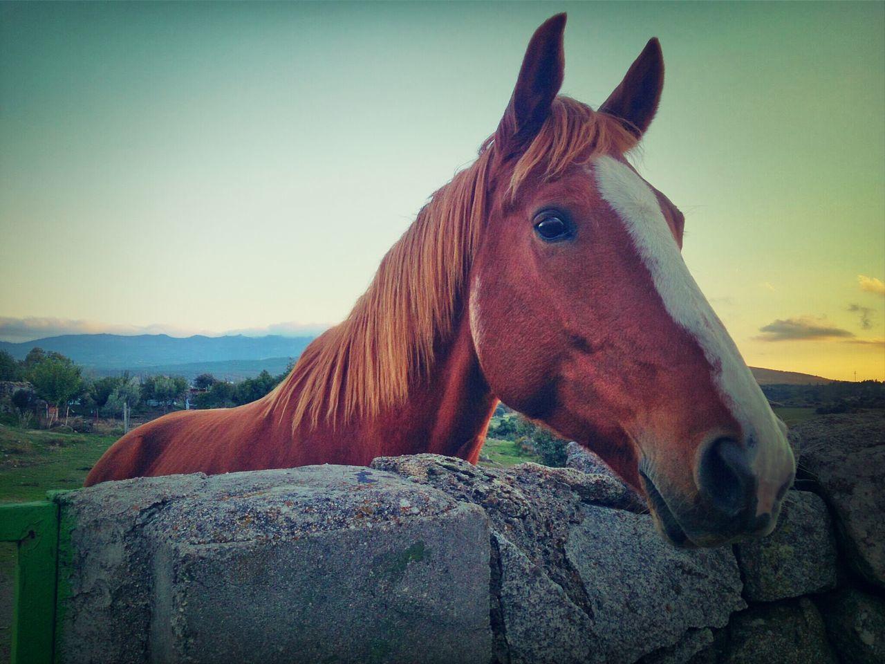 Malaquita Sierra De Guadarrama Horses Animals Sony Xperia Z