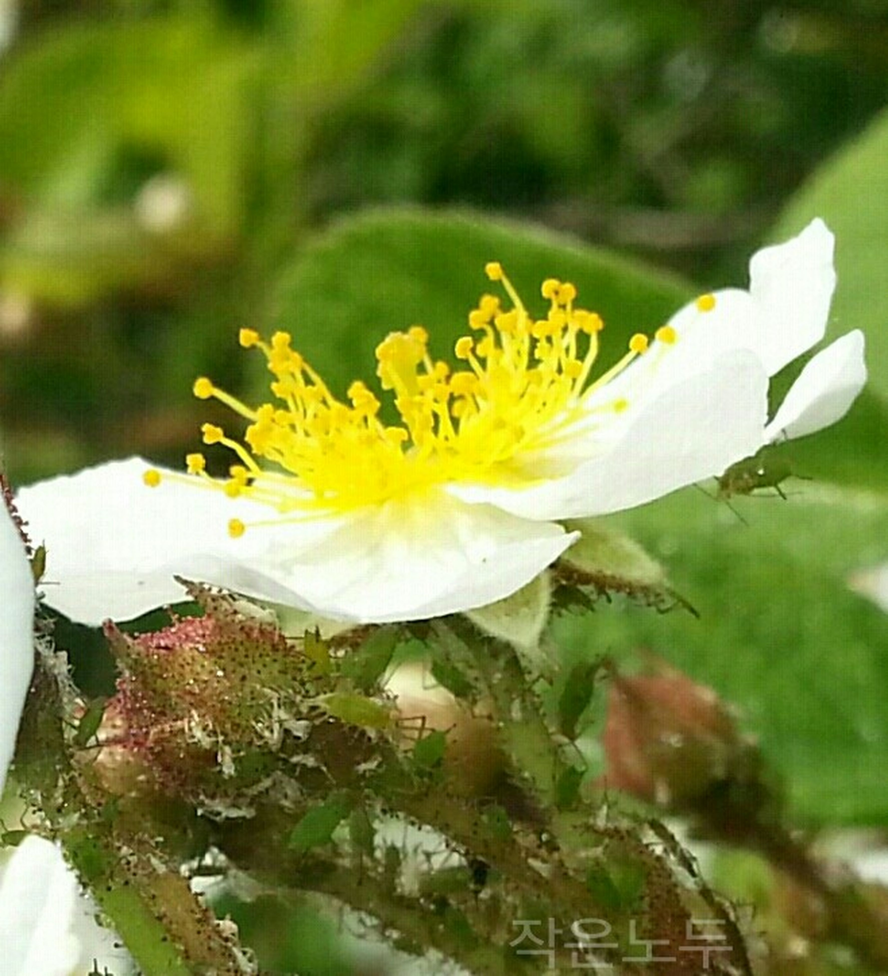 flower, petal, freshness, flower head, fragility, yellow, growth, close-up, beauty in nature, white color, plant, blooming, focus on foreground, nature, single flower, in bloom, pollen, blossom, stem, outdoors