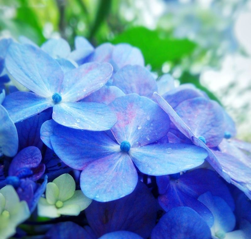 Flower Nature Beauty In Nature Blue Close-up Day No People Outdoors Flower Head Freshness
