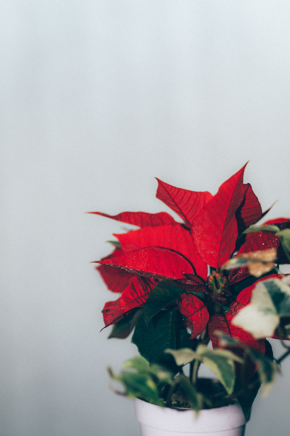 Beautiful stock photos of design,  Beauty In Nature,  Celebration Event,  Christmas,  Christmas Decoration