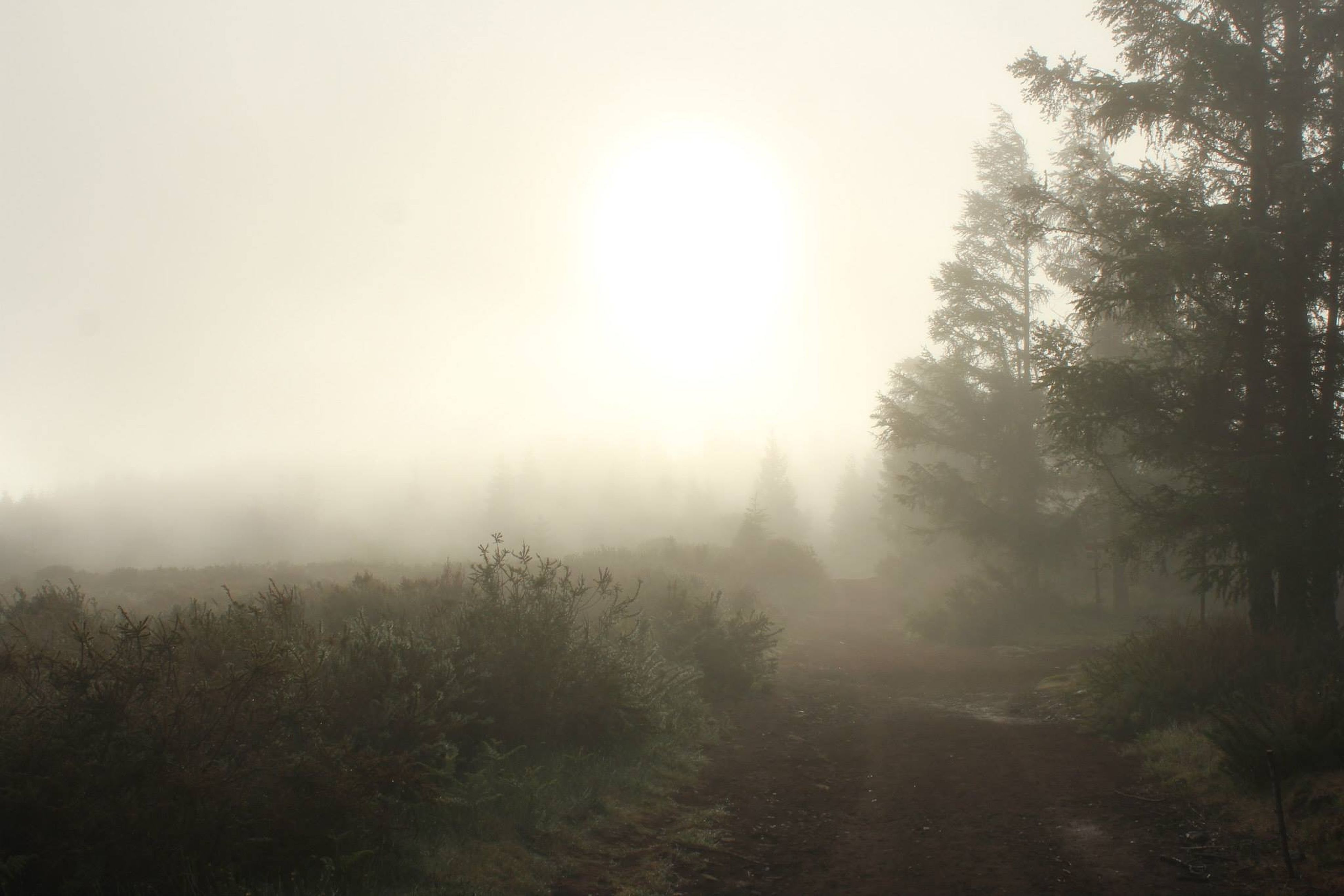 fog, tree, foggy, tranquility, tranquil scene, weather, scenics, nature, beauty in nature, the way forward, landscape, forest, non-urban scene, growth, field, winter, dirt road, sky, outdoors