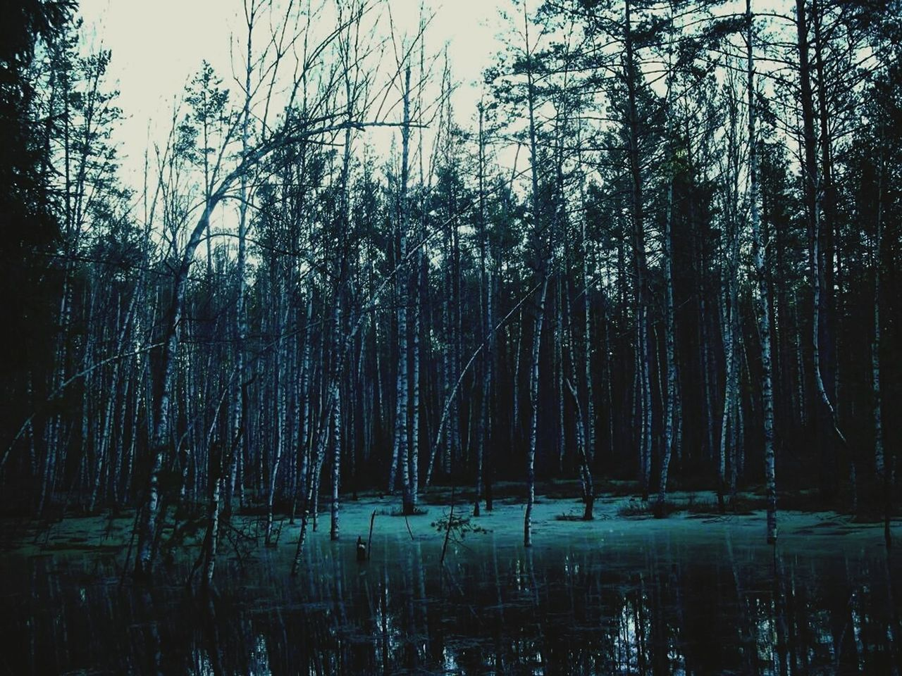 tree, forest, tranquility, nature, no people, lake, tranquil scene, beauty in nature, water, outdoors, scenics, day, growth, travel destinations, landscape, bare tree, sky