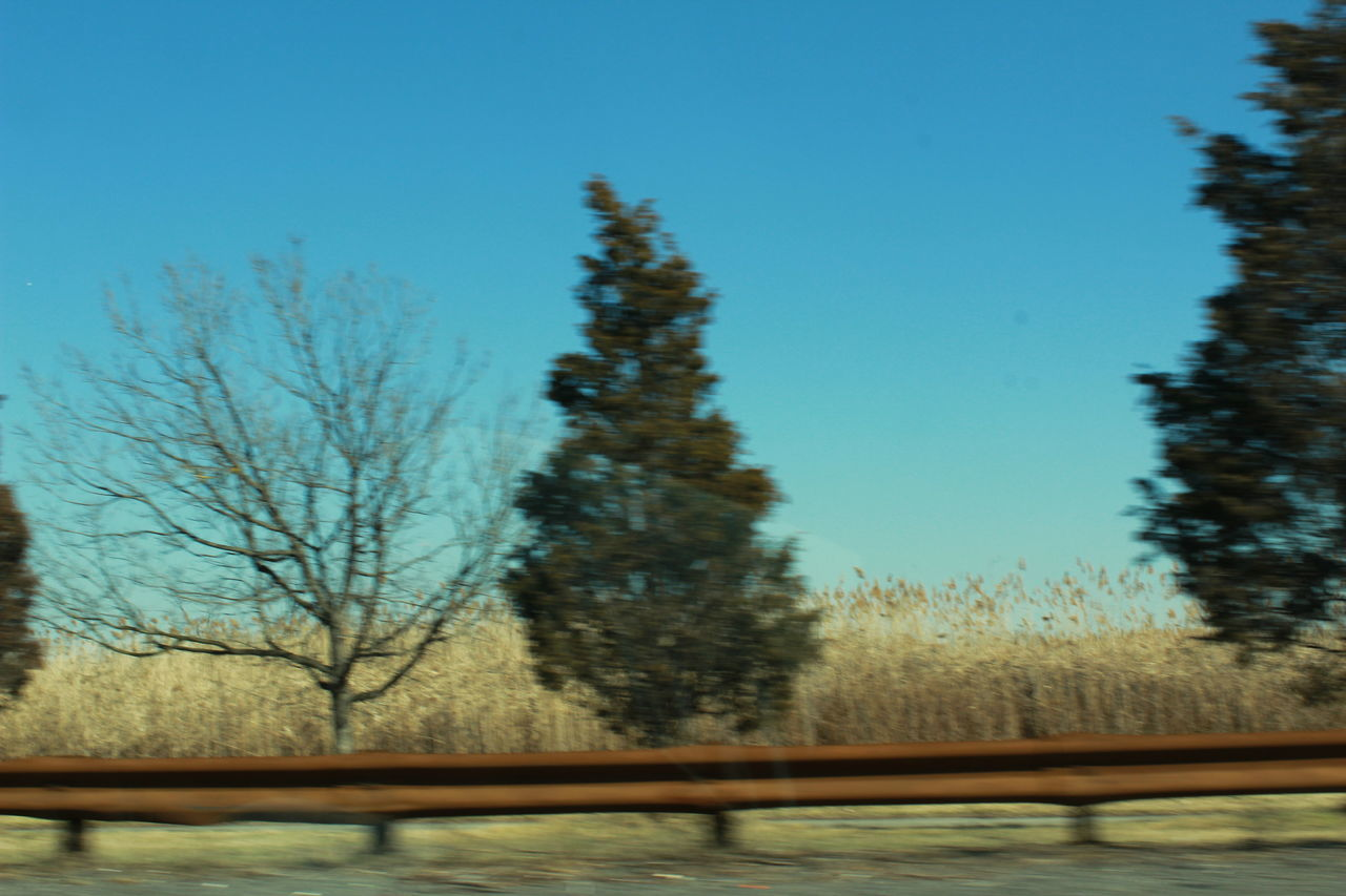 Showing Imperfection Trees Green Colors NYC VSCO Love Art Vscocam Brooklyn Adventure CarRides Highway