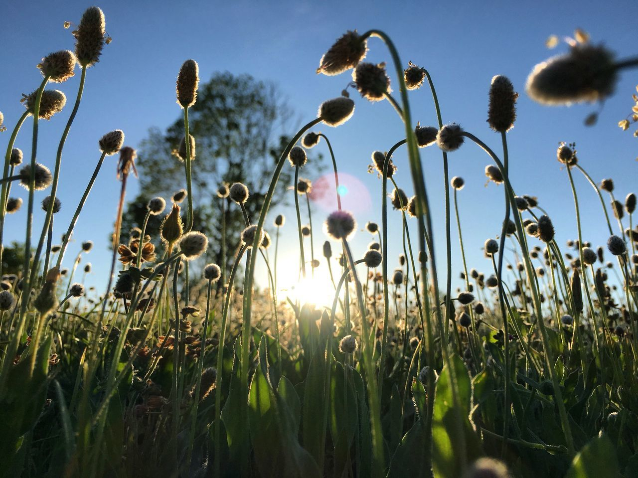 growth, nature, plant, field, no people, beauty in nature, outdoors, day, flower, sunlight, grass, sky, freshness, clear sky, close-up, fragility