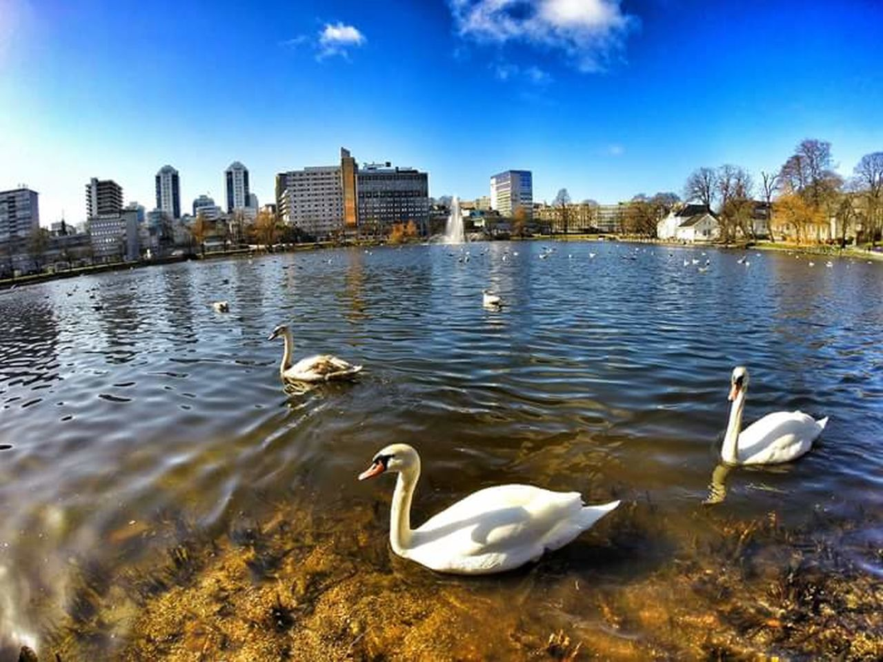Stavanger Norway Norge Byparken City Modern Urban Skyline Cityscape Outdoors Travel Destinations Swans Lake Aroundtheworld Follow4follow Eyemphotography Travel Photography Goprophotography NorwayTourism Traveladdict Worldplaces Tourism Landscape