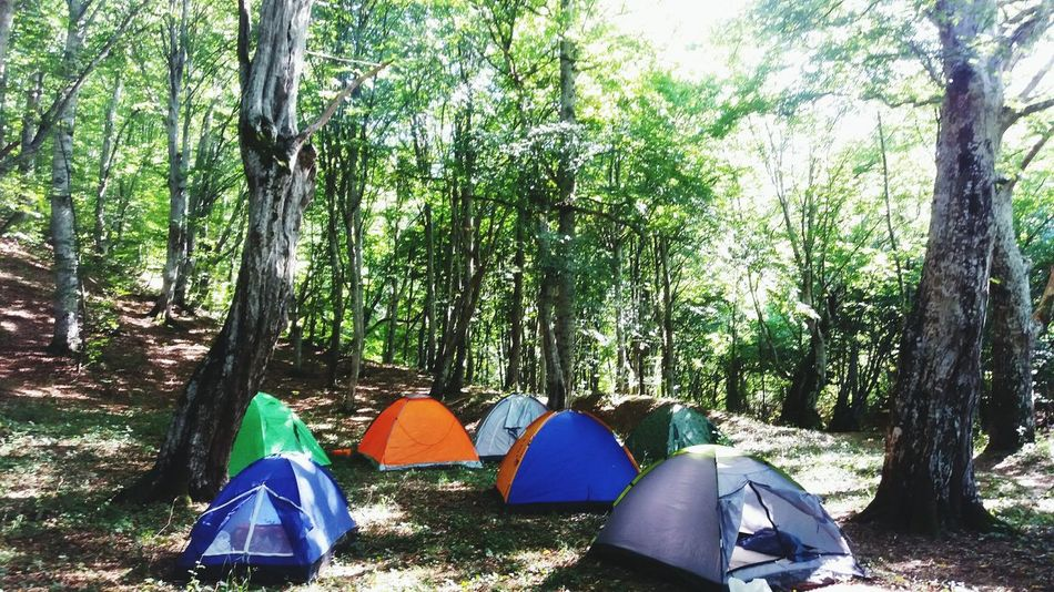 Tree Day Nature Forest Outdoors Tree Trunk Growth Beauty In Nature Sky Tents In Forest I Am New Here.