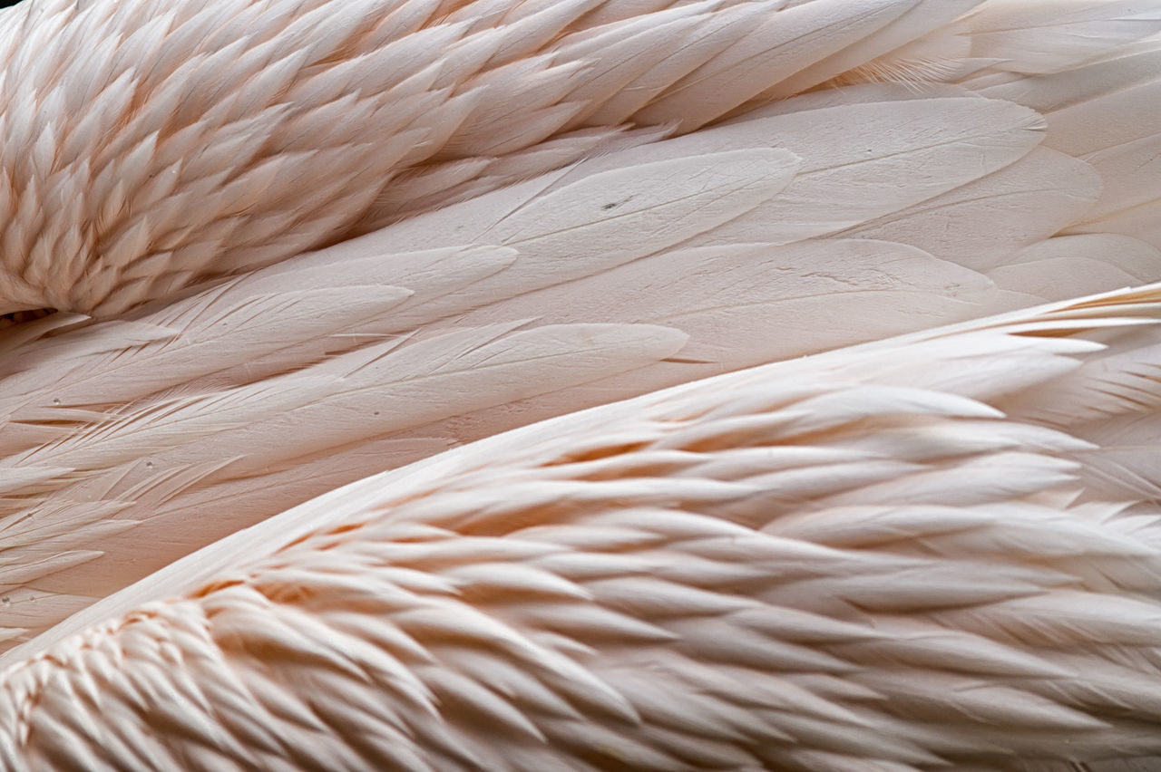 Beautiful stock photos of birds, Animal Themes, Animal Wildlife, Animals In The Wild, Backgrounds