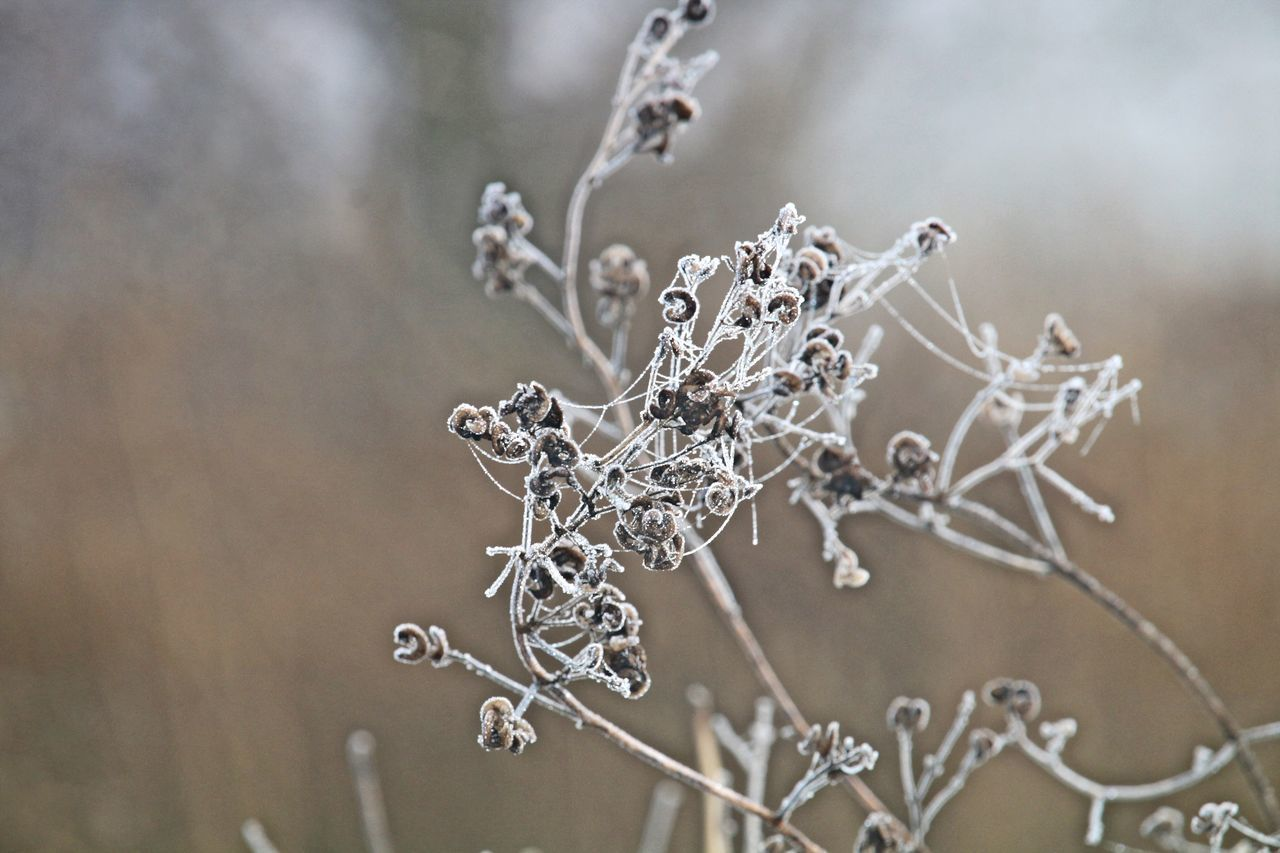 cold temperature, close-up, focus on foreground, nature, fragility, winter, frozen, no people, ice, day, outdoors, beauty in nature, water