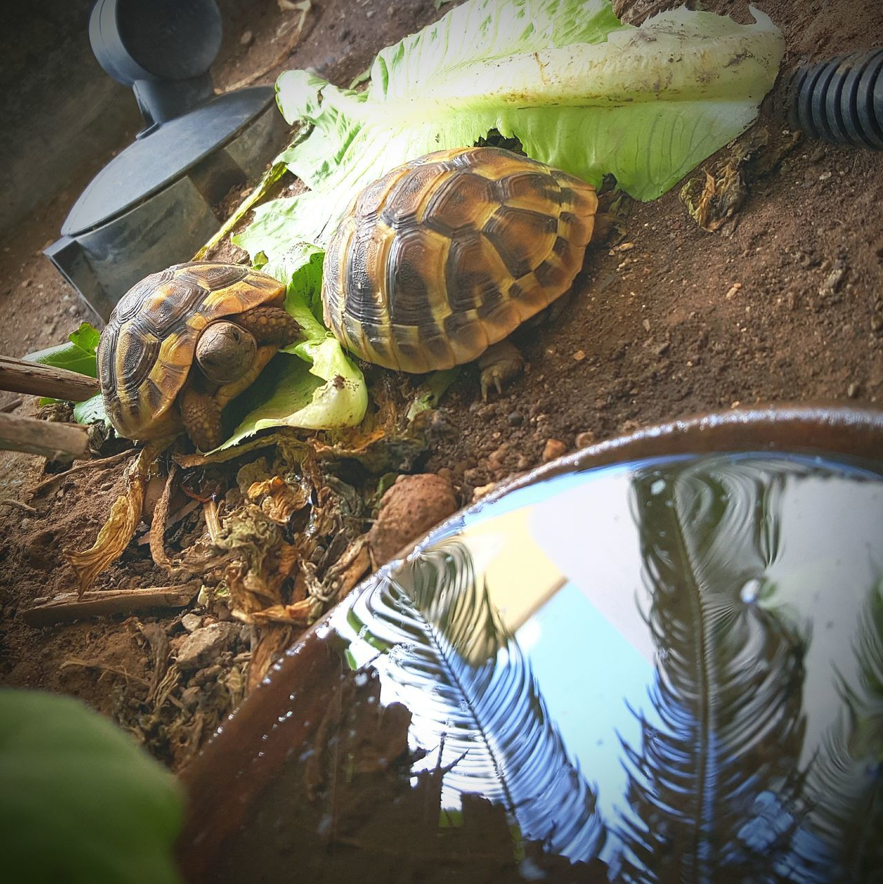Turtles On Ground