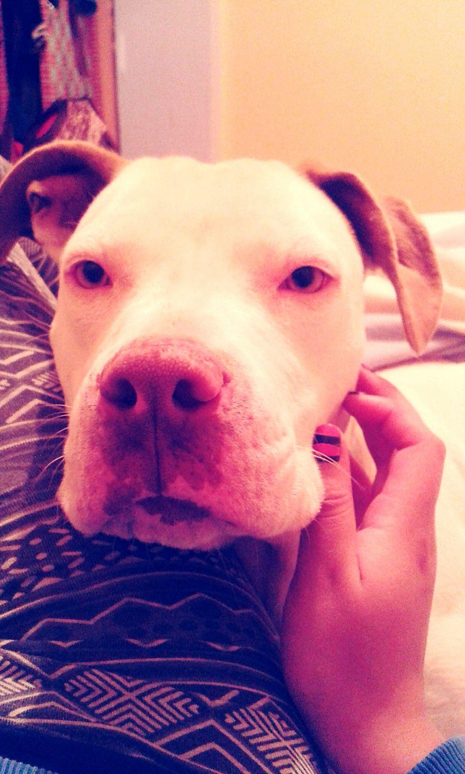 Dog Domestic Animals One Animal Loyalty Relaxation Lunita