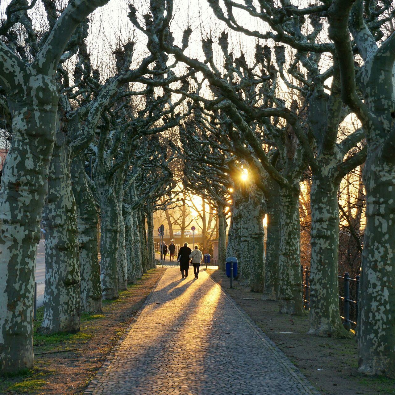 Beautiful stock photos of park, Bare Tree, Bonding, Care, Couple
