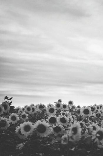 Flowers Hipster Hipsterswag Blackandwhite