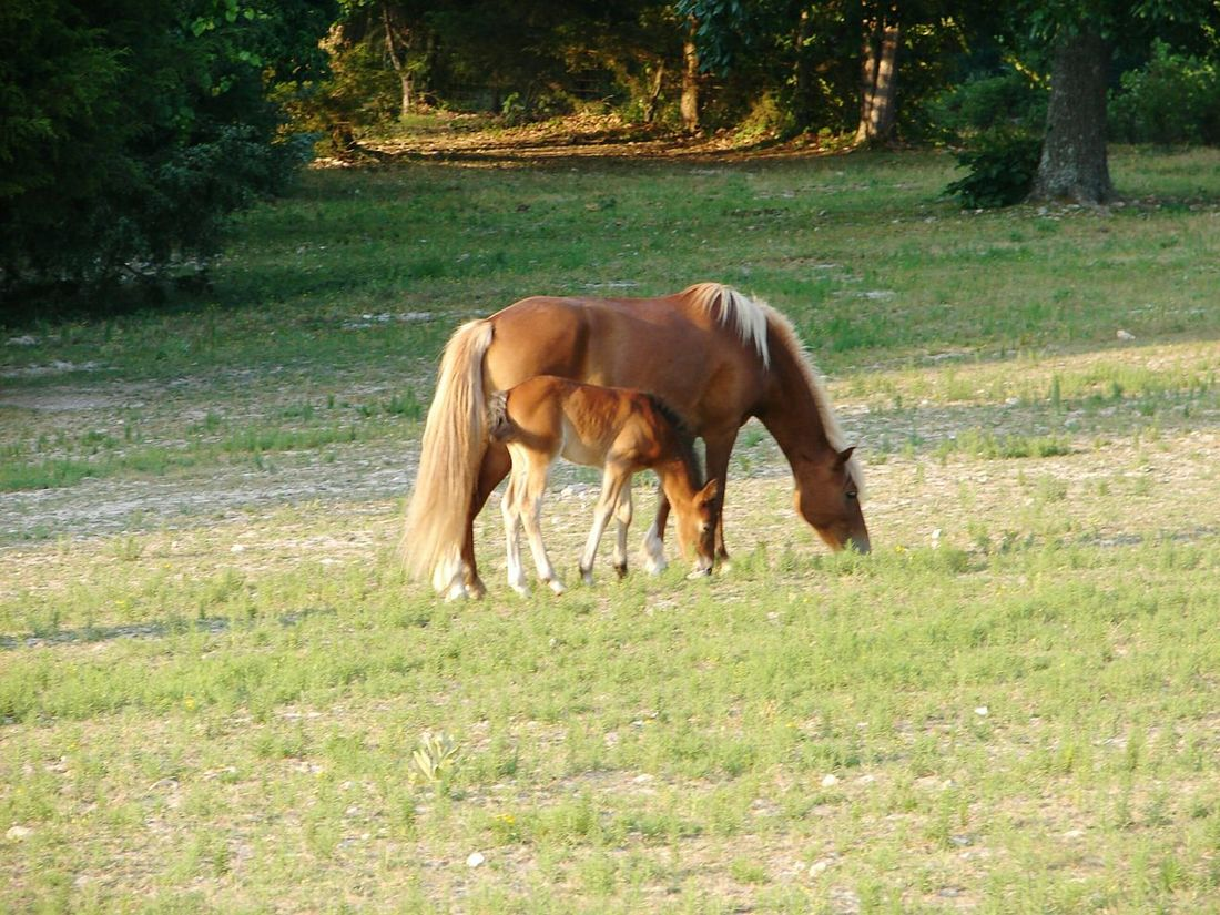 Horsing Around Harriet Arkansas Arkansas_ozarks Horses