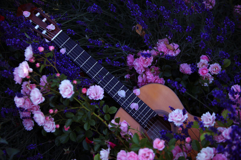 Guitar & Flowers Beauty In Nature Blooming Blossom Blossoms  Flamenco Flower Flowers Flowers, Nature And Beauty Guitar Guitar Love In Bloom Lavender Lavenderflower Lilac Lilac Flower Lilac Flowers Music Music Is My Life Musical Instruments Pink Color Playing Guitar Purple Purple Blossoms Roses Spanish Guitar