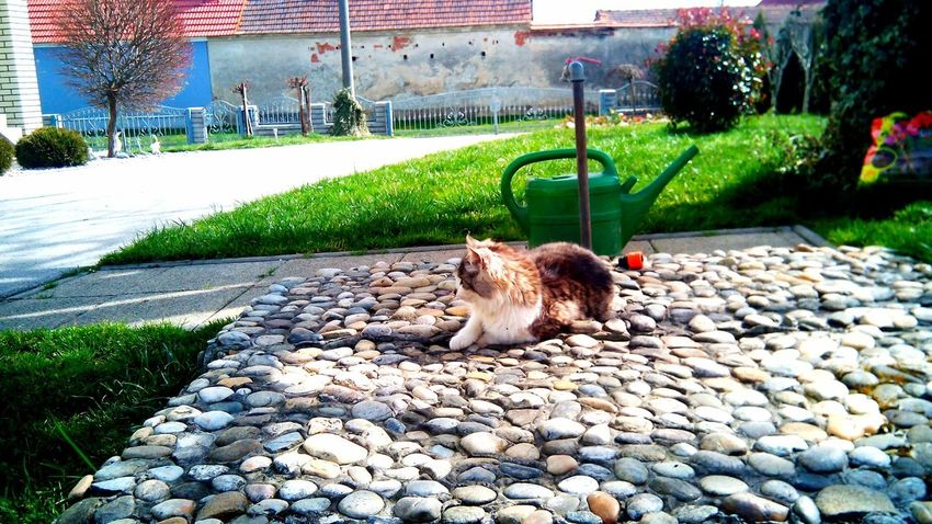 Animal Themes One Animal Pets Domestic Animals Mammal Domestic Cat Outdoors Day No People Feline