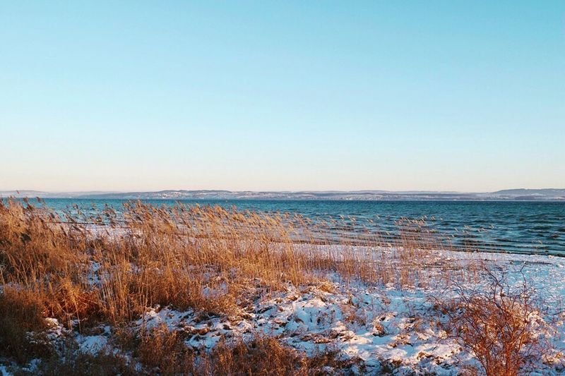 Bodensee Nature Beauty In Nature Tranquil Scene Scenics Sea Tranquility Water Copy Space Outdoors No People Clear Sky Winter Horizon Over Water Beach Travel Destinations Marram Grass Cold Temperature Landscape Day Sky Seeufer Bodenseebilder