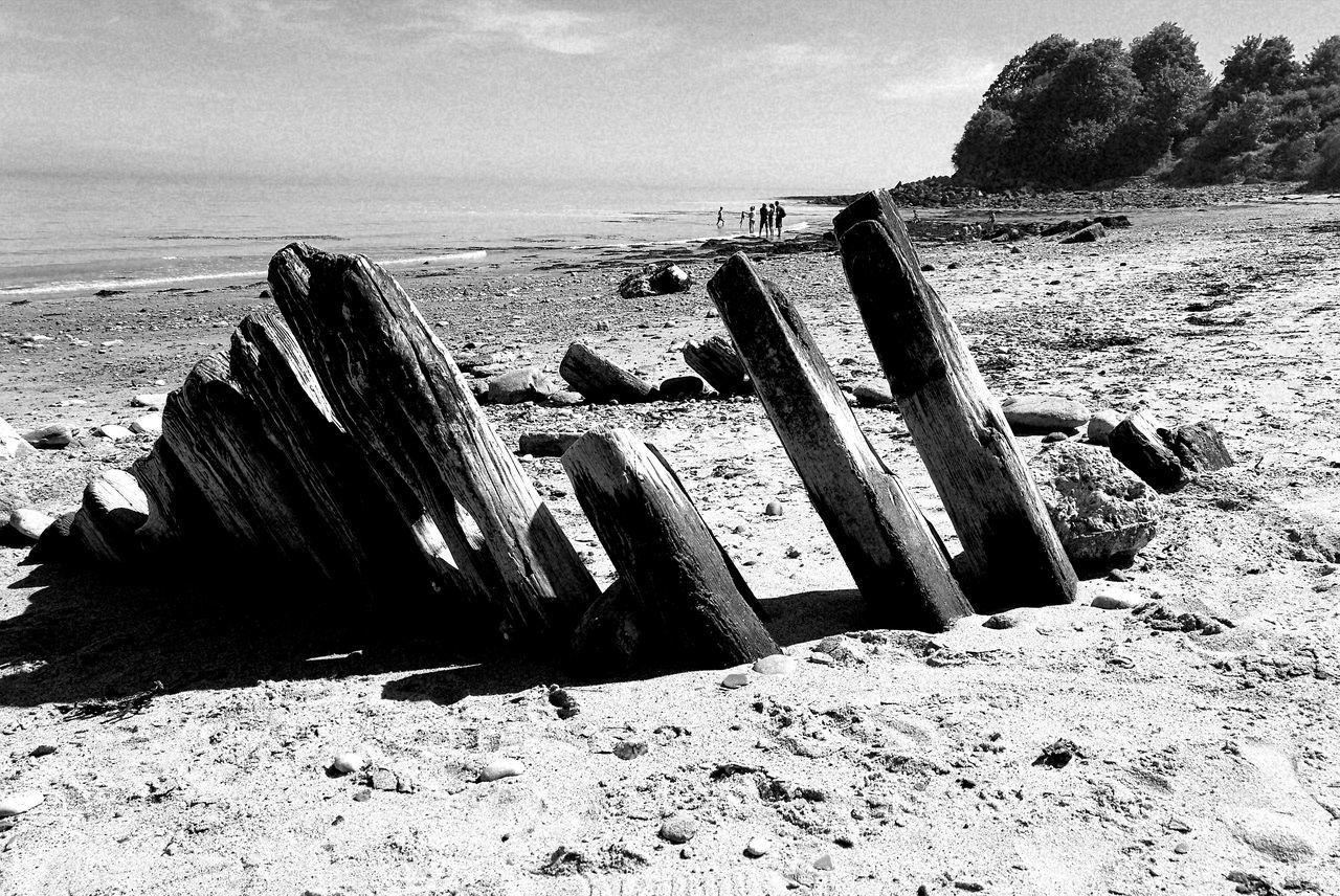 Drift Wood On Beach Nature Beach Sea Sand Outdoors