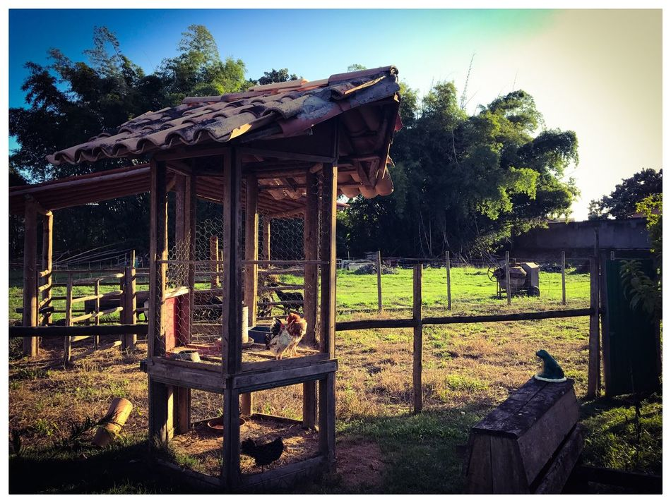 No Quintal. The Secret Spaces EyeEmNewHere Ipiau Nature Galinhas No People Brazil Jardin