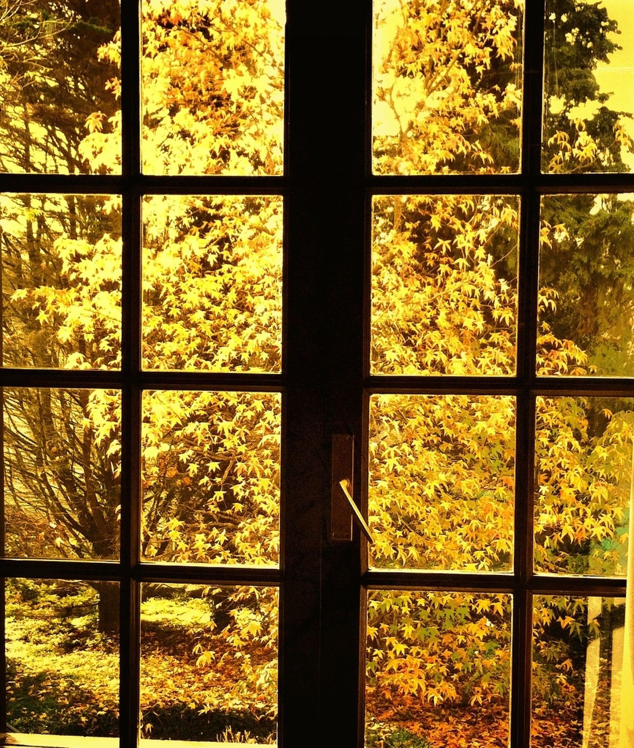 A través da ventana.