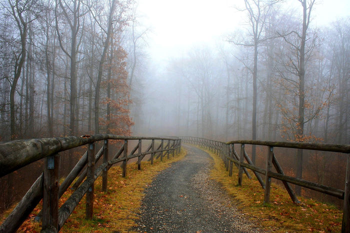 Pfad im Nebel Autumn Autumn Colors Autumn Leaves Bare Tree Beauty In Nature Day Fog Fog Day Foggy Weather Forest Mystic World Of Nature Mystical Atmosphere Mystical Forest Nature Nature Reserve No People Outdoors Tranquil Scene Tranquility Tree Walk Way Wood Railing EyeEmNewHere